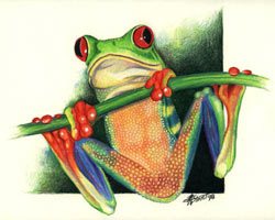 Morris Street - Red-eyed Tree Frog I